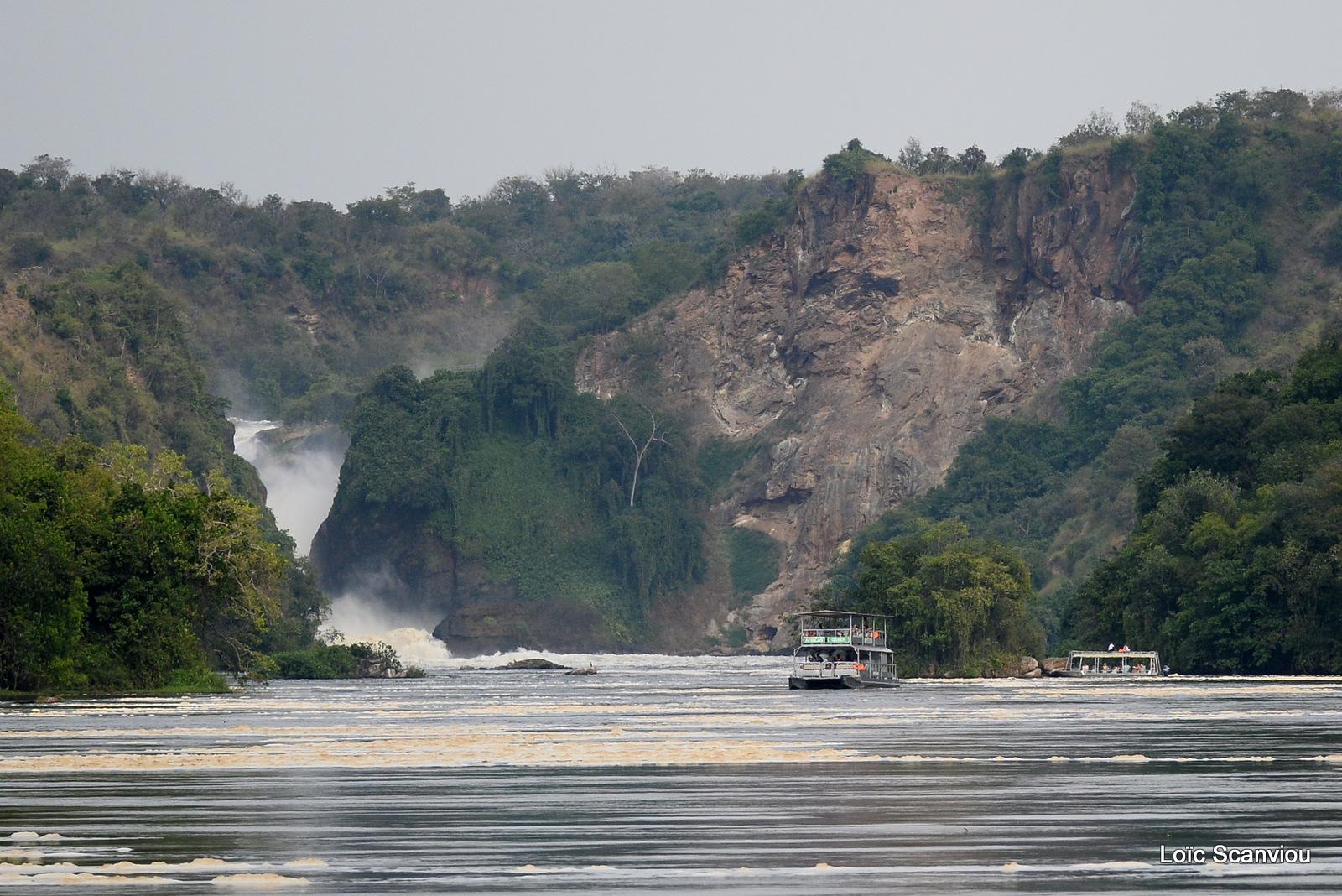 Les chutes de Murchison/Murchison Falls (4)