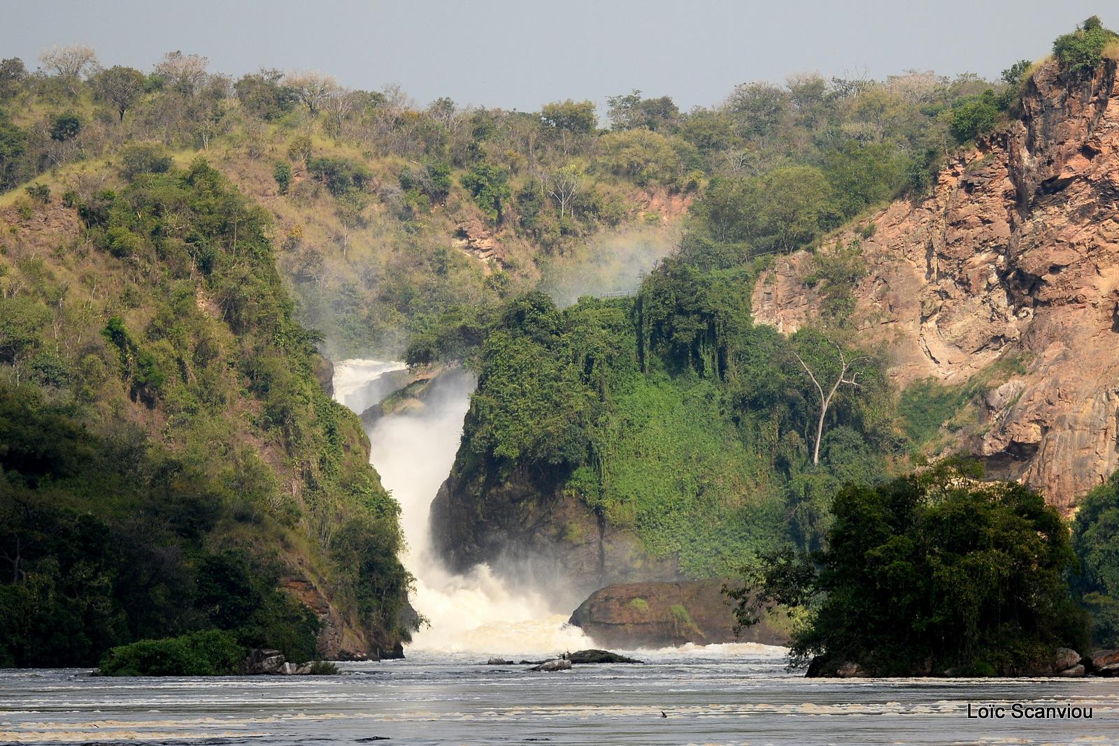 Les chutes de Murchison/Murchison Falls (5)