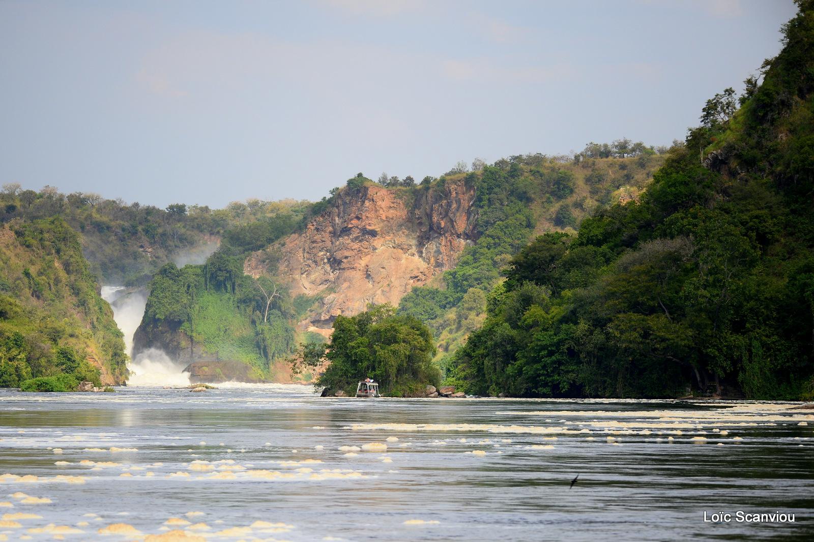 Les chutes de Murchison/Murchison Falls (7)