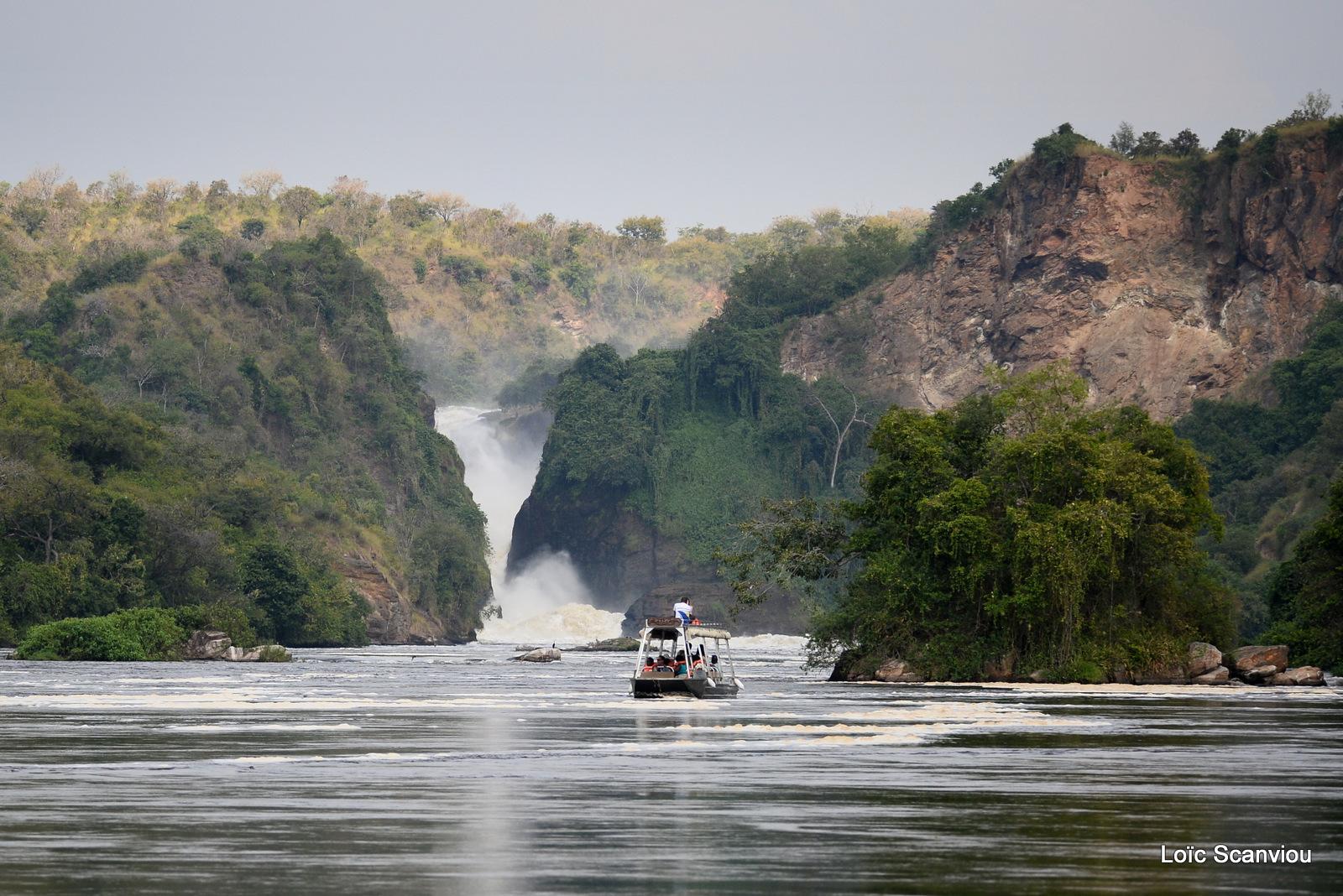 Les chutes de Murchison/Murchison Falls (8)