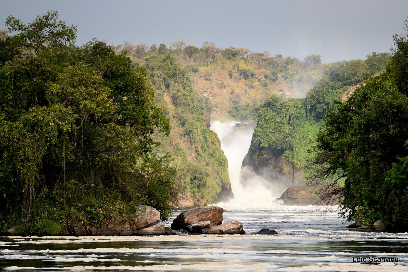 Les chutes de Murchison/Murchison Falls (10)
