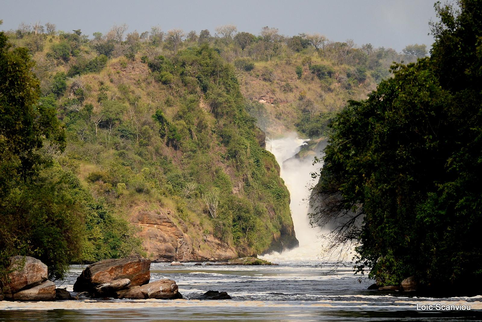 Les chutes de Murchison/Murchison Falls (11)