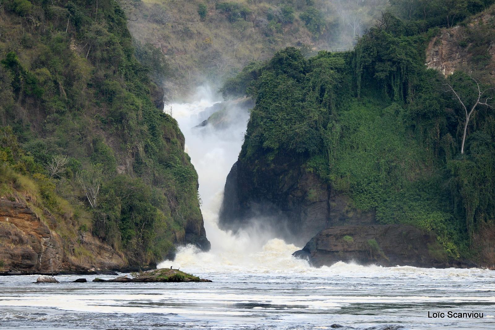 Les chutes de Murchison/Murchison Falls (12)