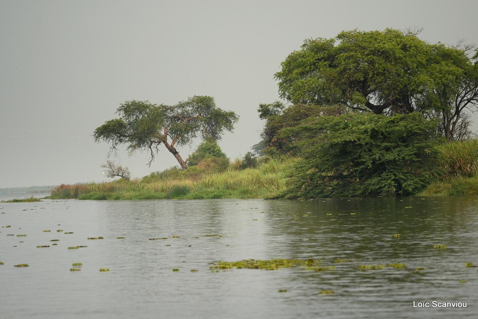 Nil Victoria/Victoria Nile (11)