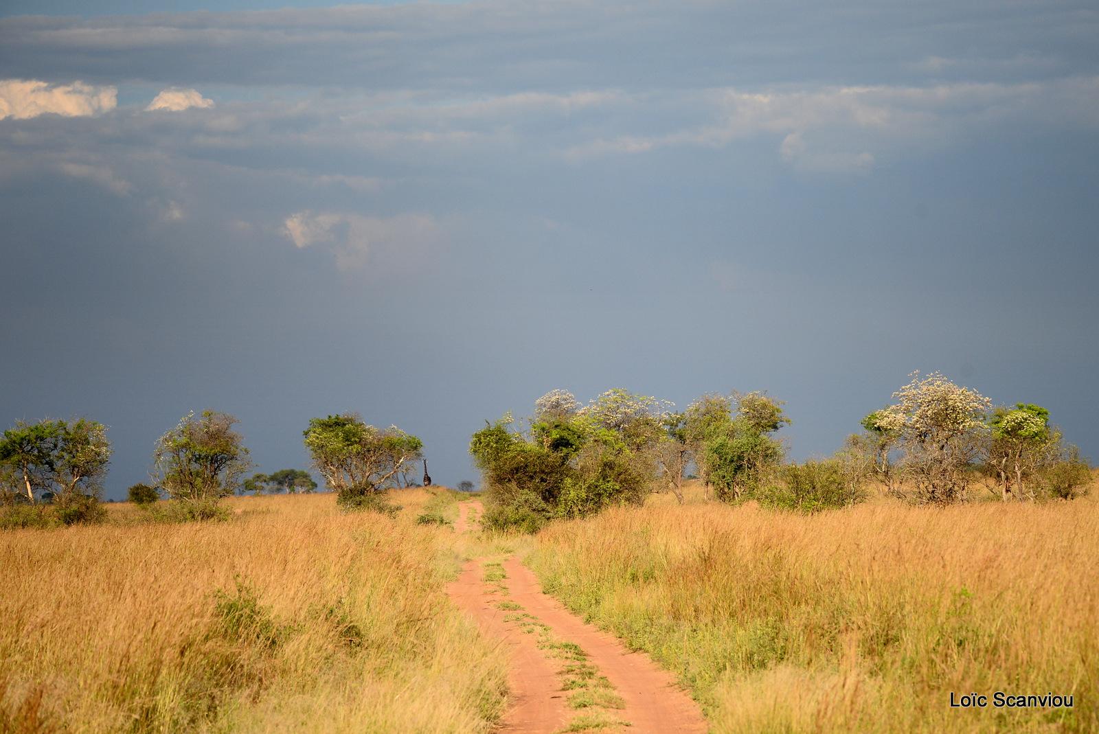 Murchison Falls (231)