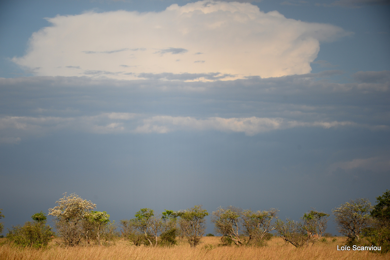 Murchison Falls (232)