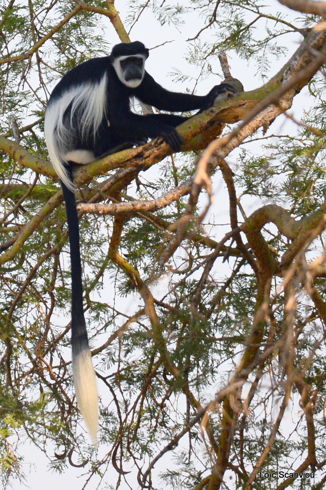Murchison Falls (290)