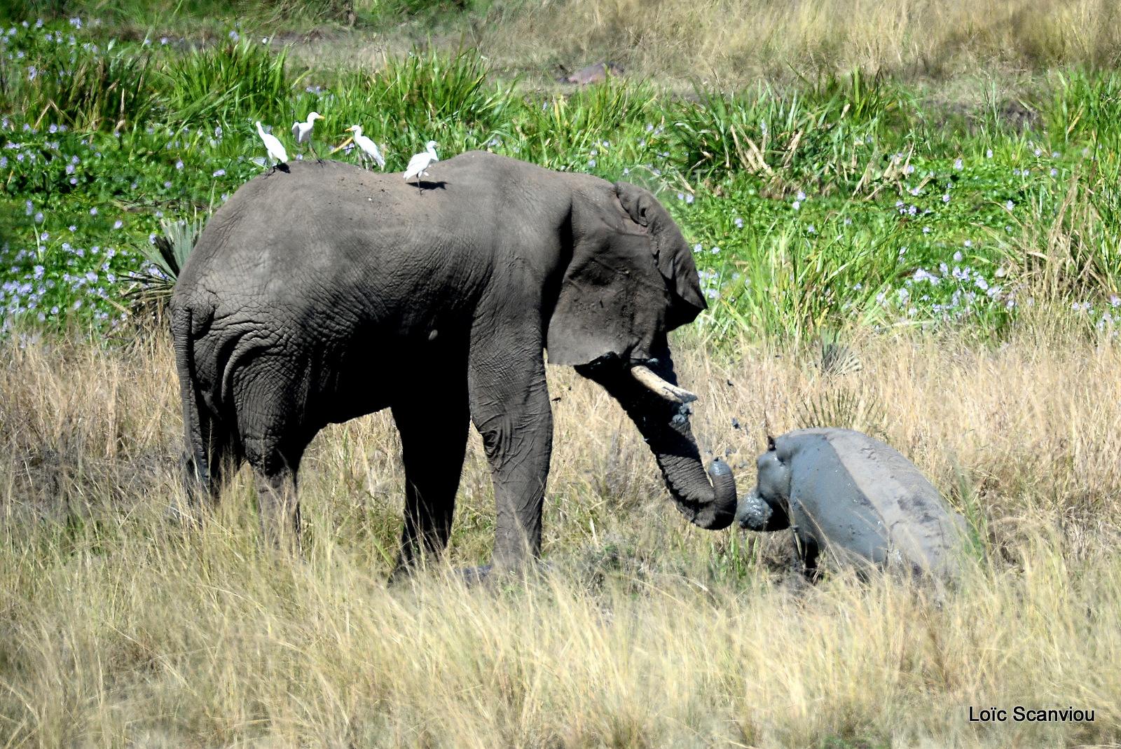 Murchison Falls (298)