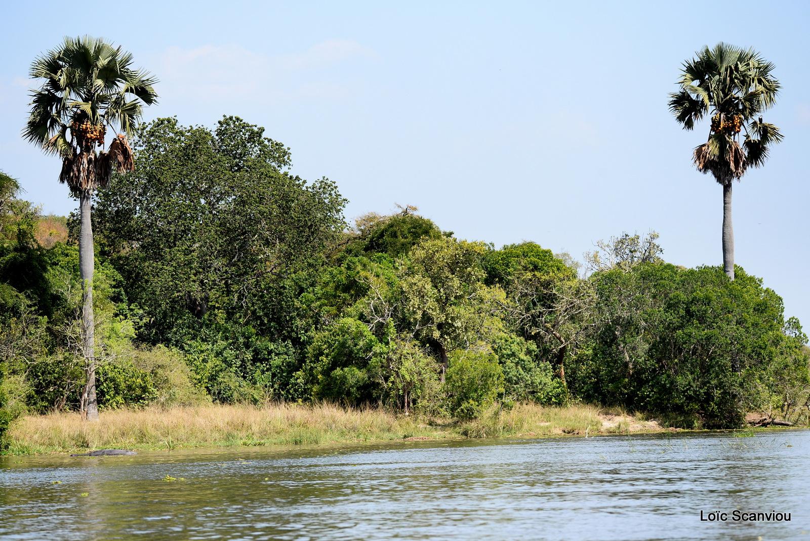 Nil Victoria/Victoria Nile (15)