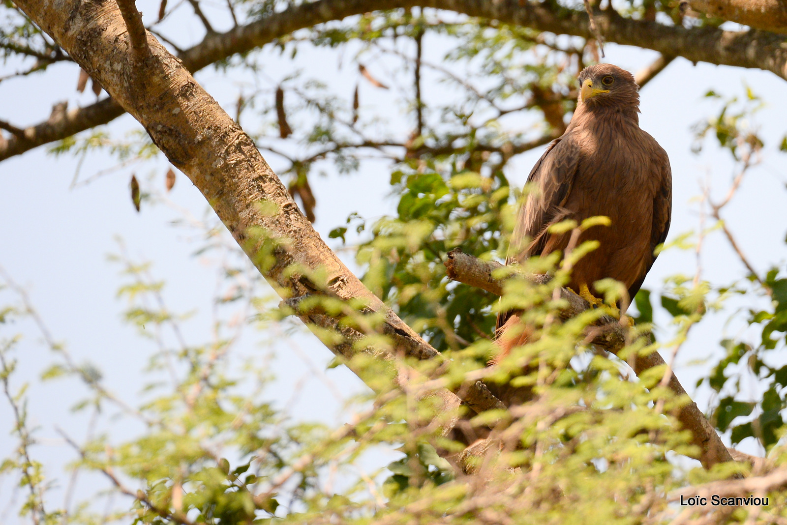 Murchison Falls (72)