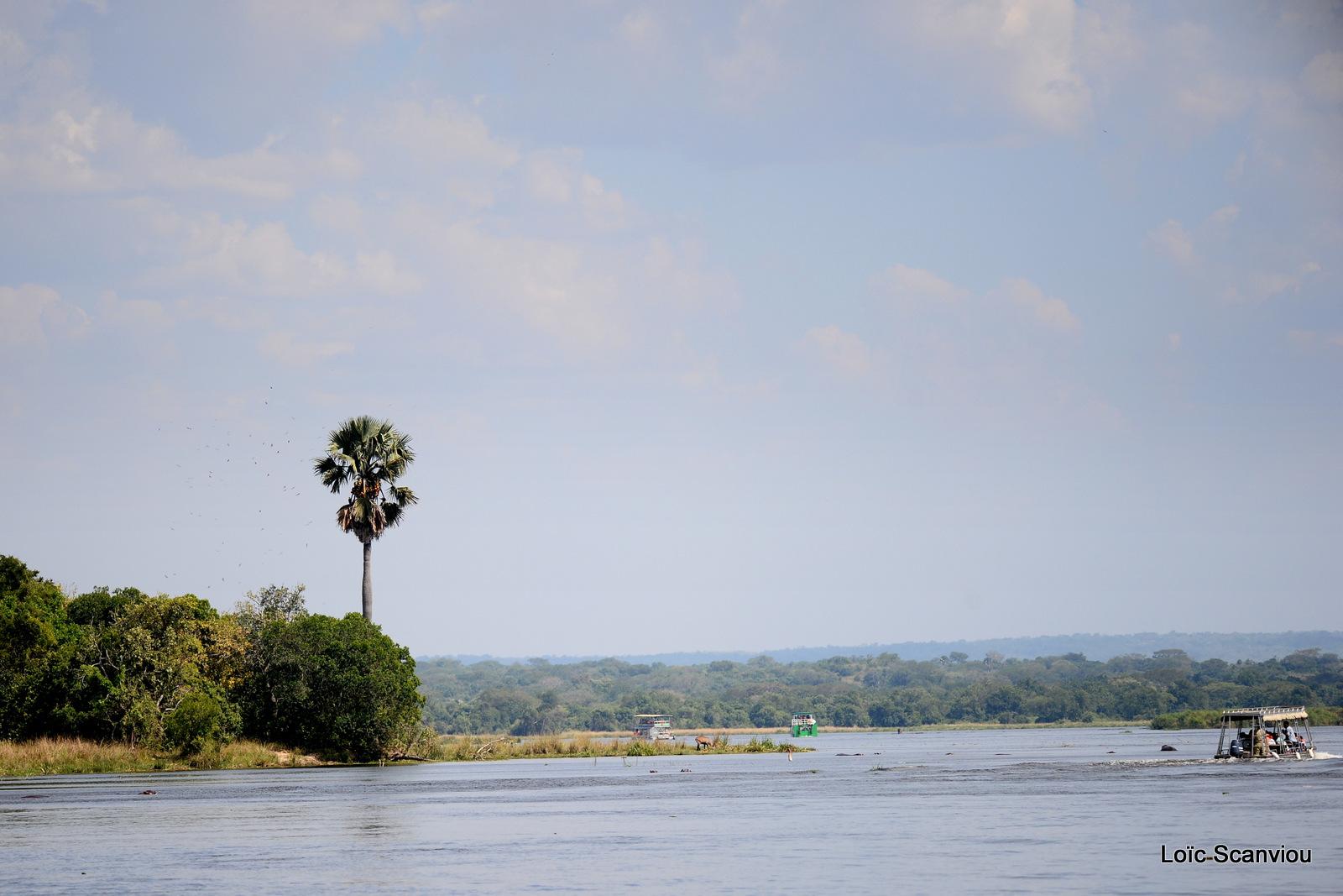 Nil Victoria/Victoria Nile (4)
