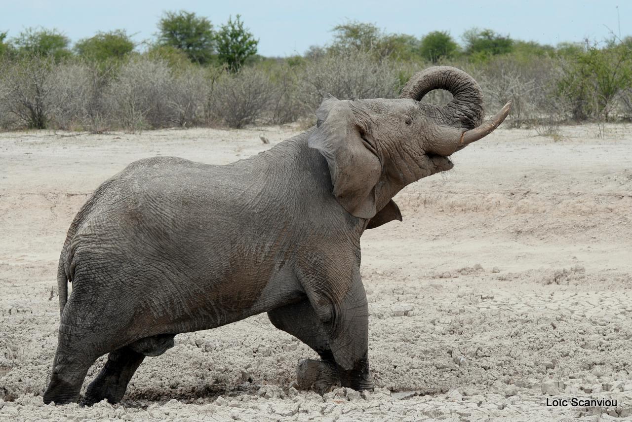 Elephant (40)