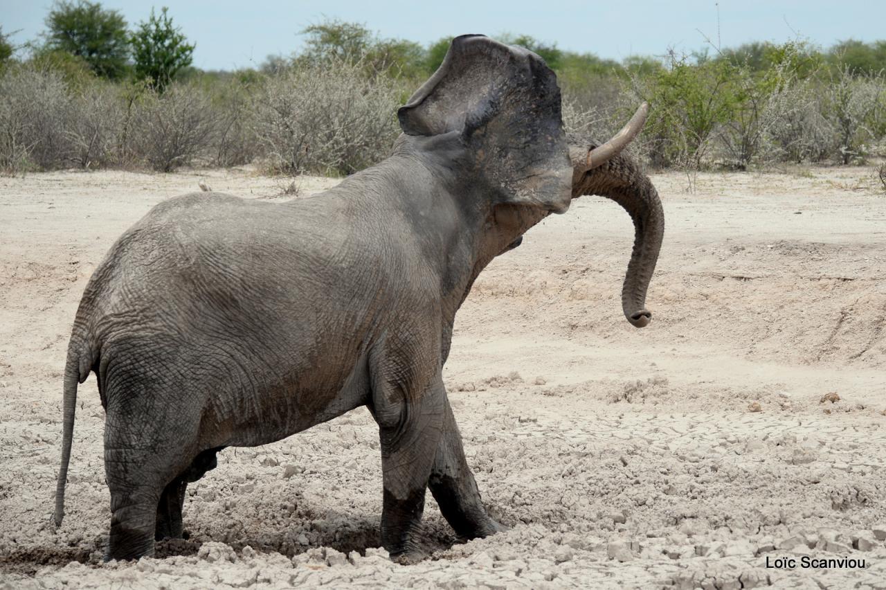 Elephant (41)