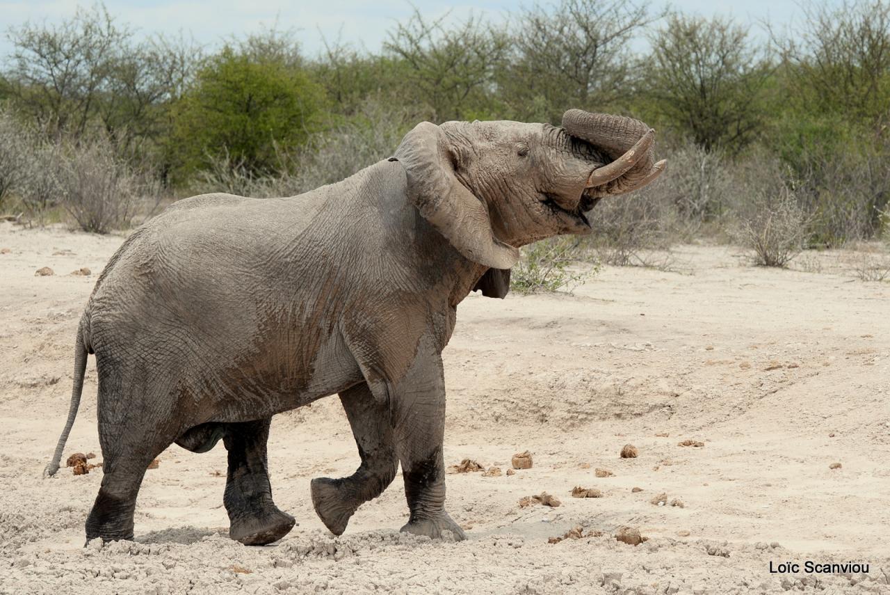 Elephant (43)