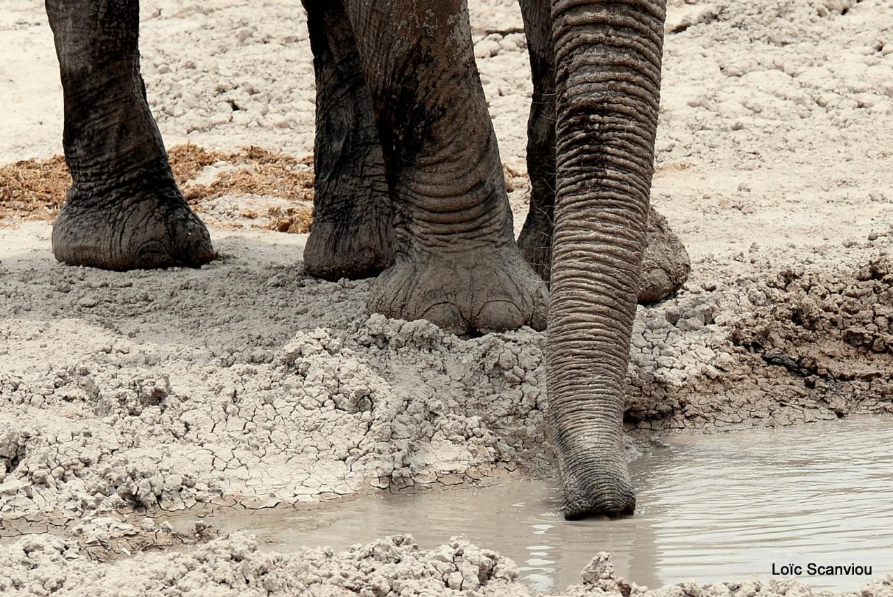 Elephant (48)