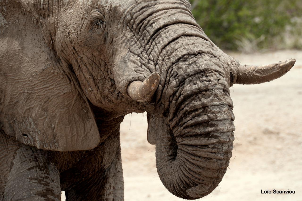 Elephant (49)