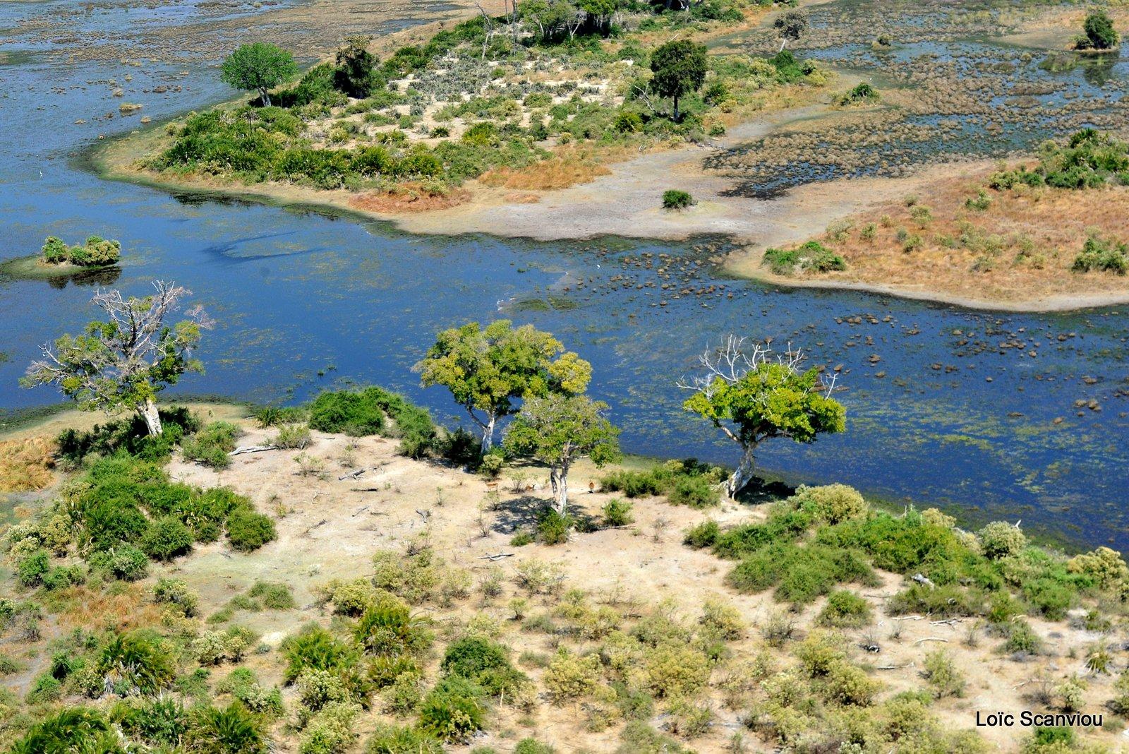 Okavango (1)