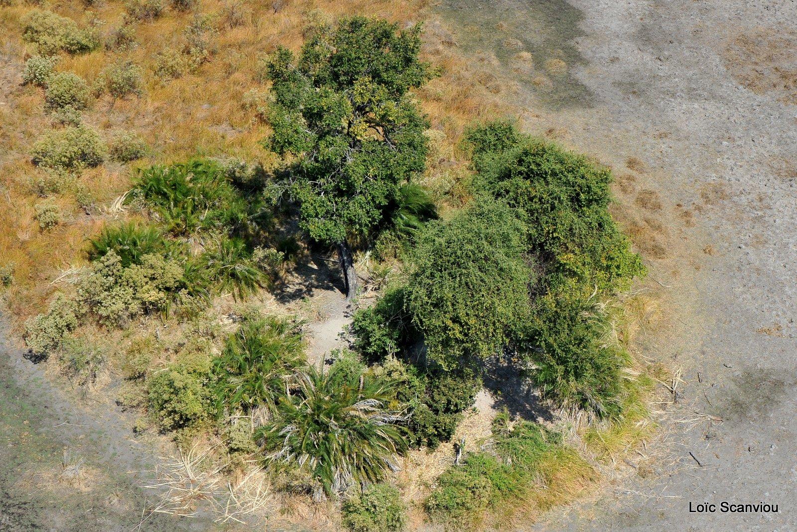 Okavango (3)