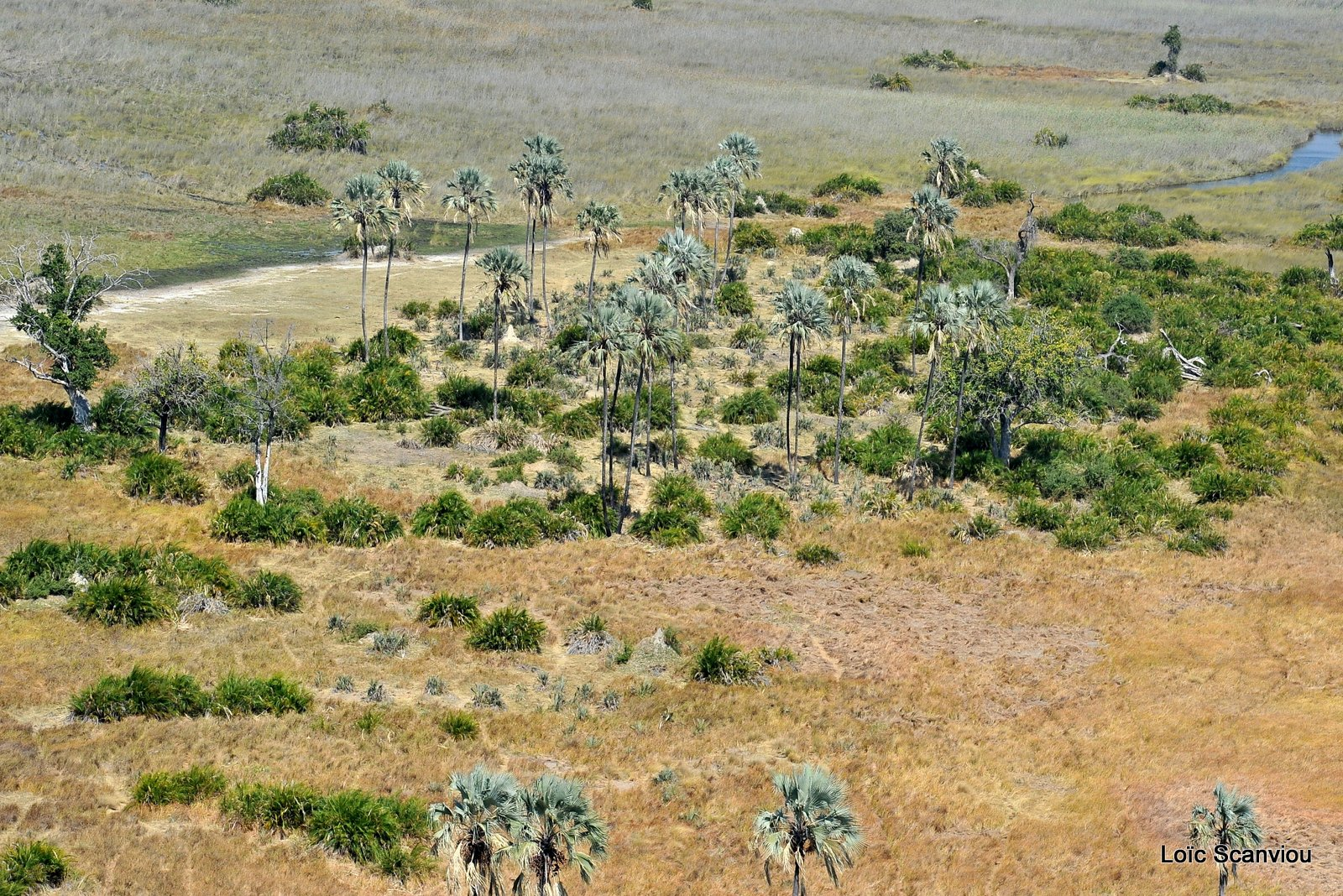 Okavango (4)