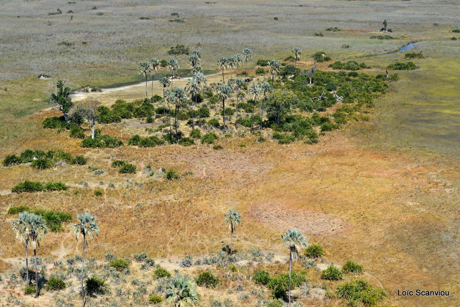 Okavango (5)