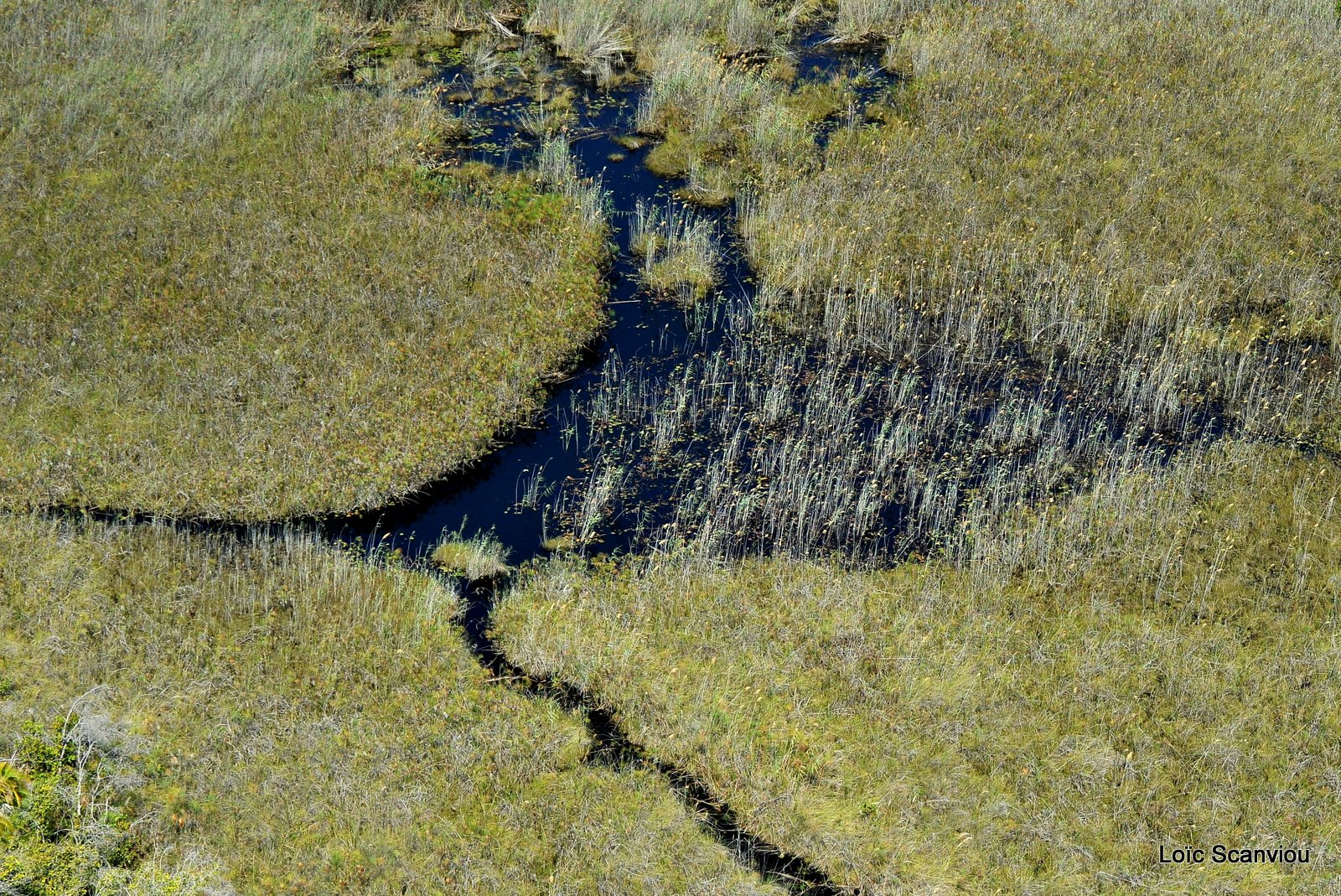 Okavango (6)