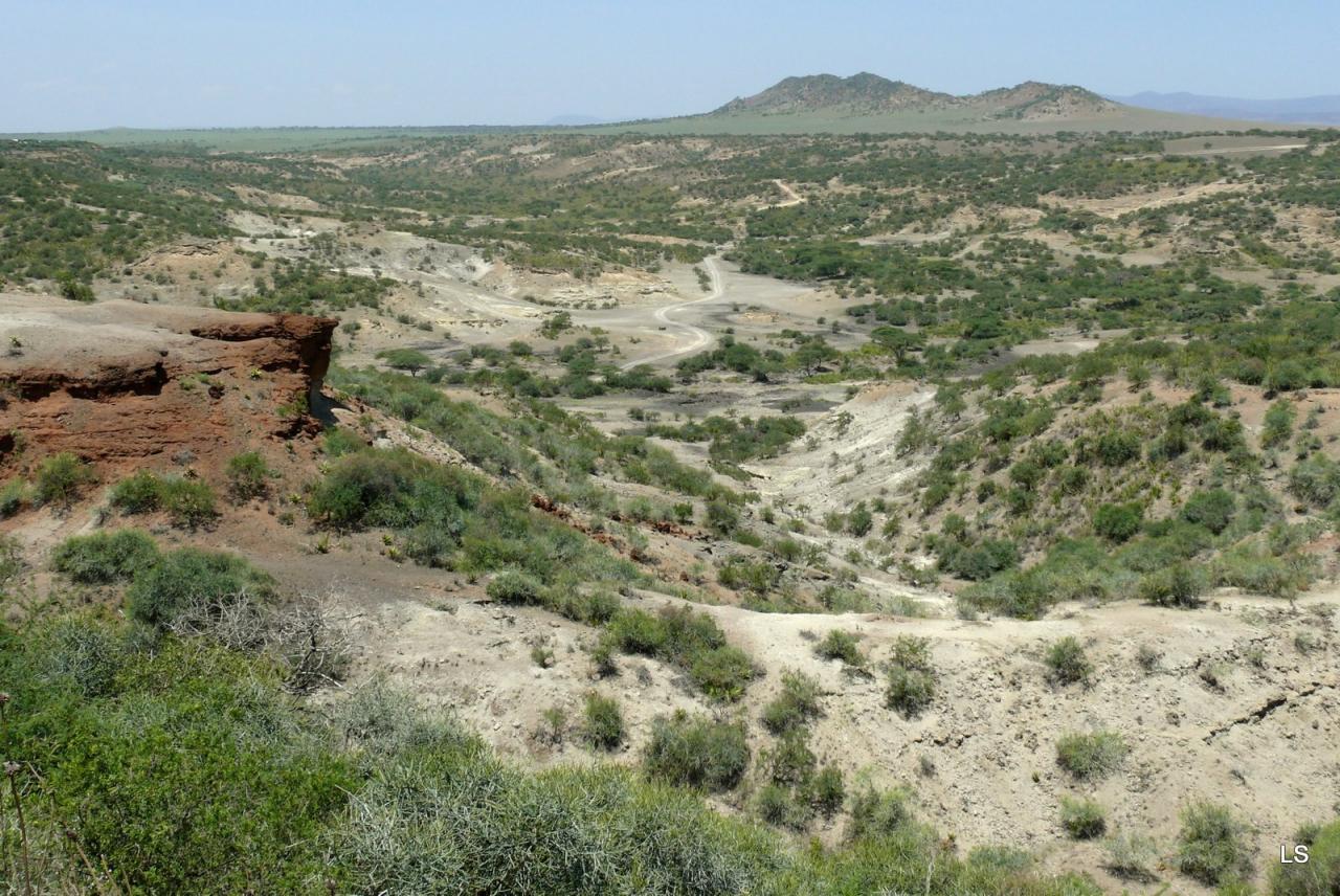 Olduvaï 2008