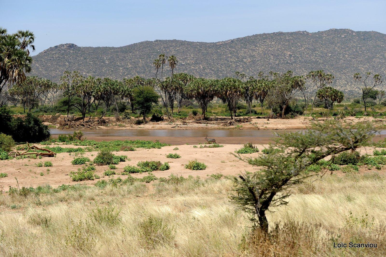 Samburu (1)