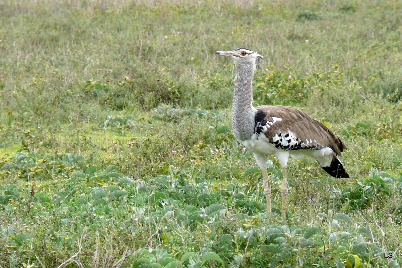 Serengeti 2008