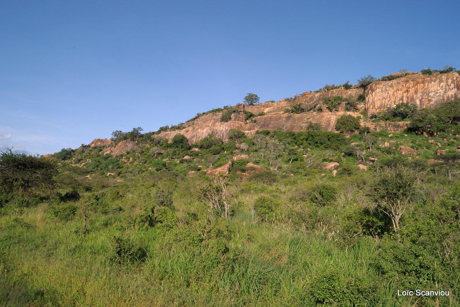 Tsavo West (11)