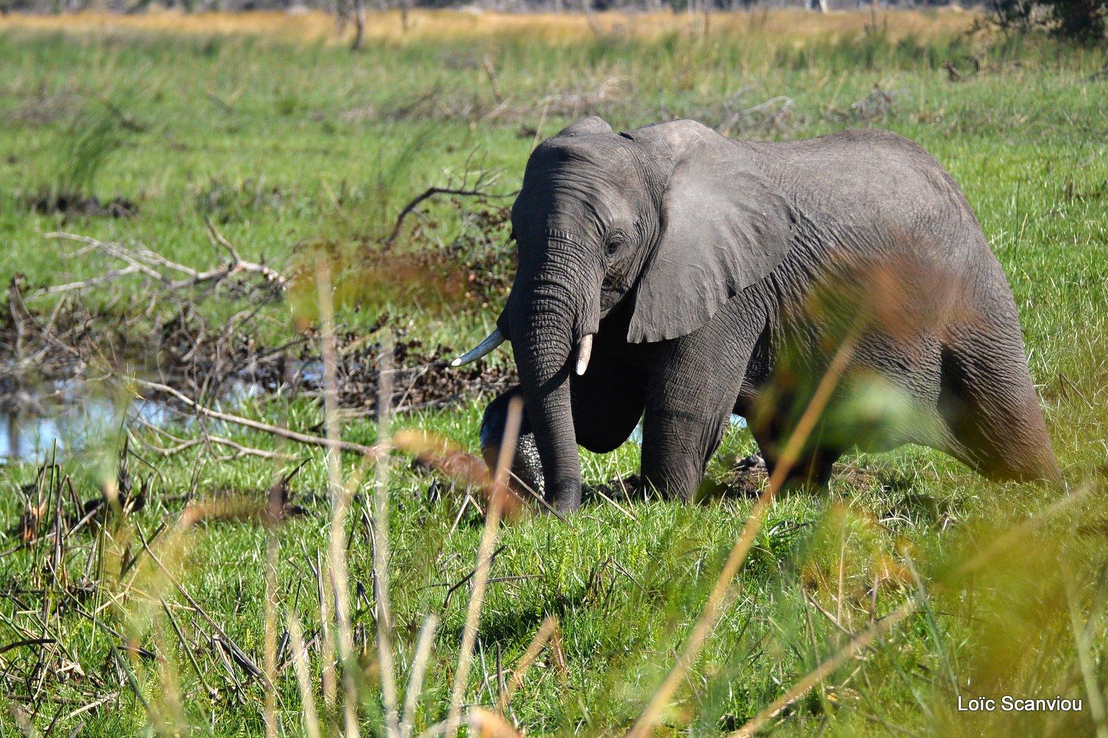 Xugana Island (Delta Okavango) 2019
