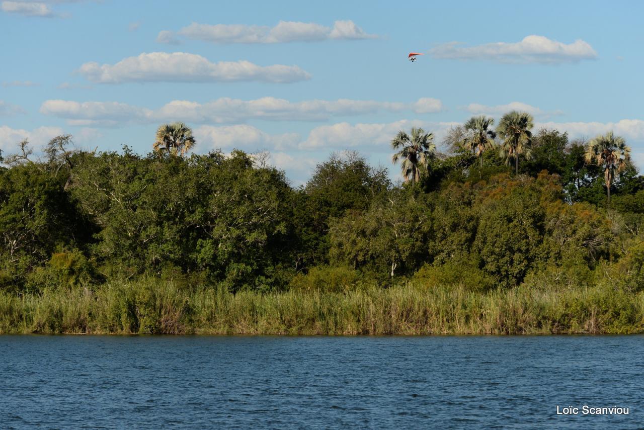 Zambezi cruise (1)