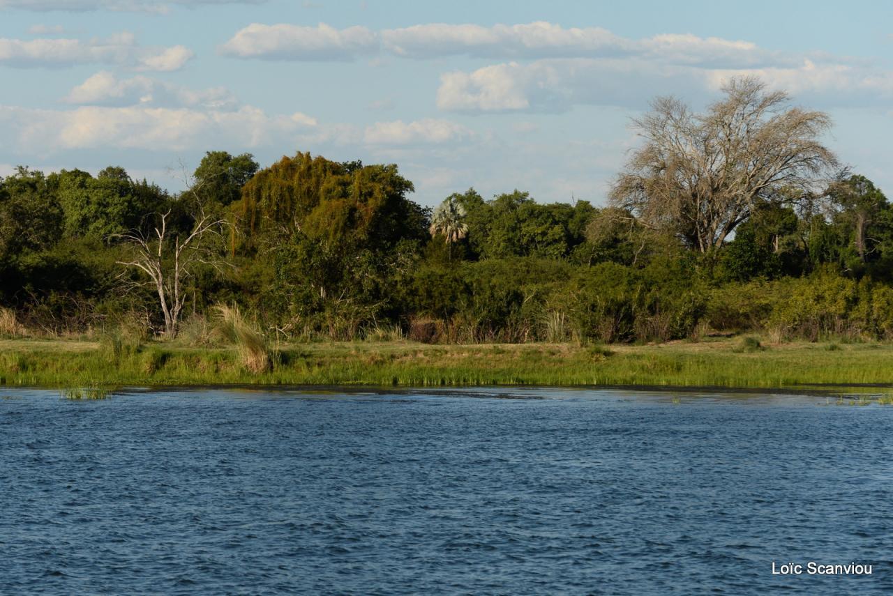 Zambezi cruise (6)