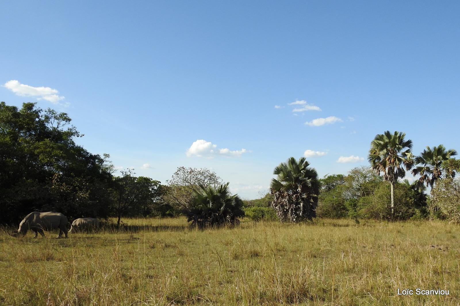 Ziwa Rhino Sanctuary (43)